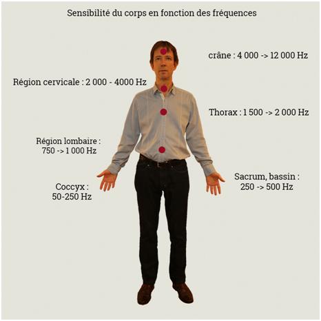sensibilités du corps avec les fréquences